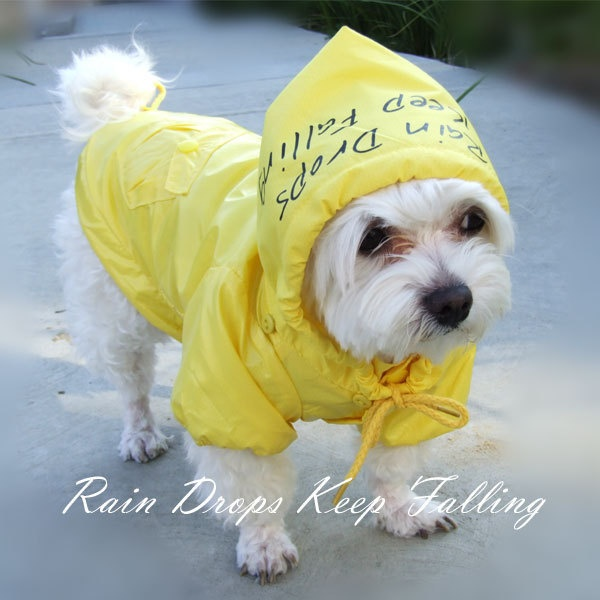 Raincoat Dog photo - 2