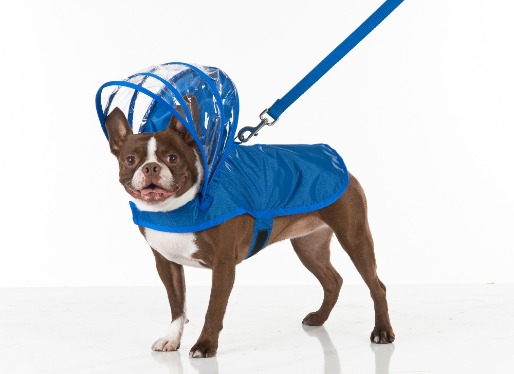 Raincoats For Dogs photo - 3