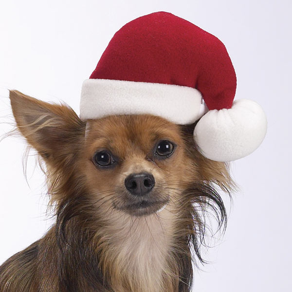 Christmas Hats For Dogs.Santa Hats For Dogs Dress The Dog Clothes For Your Pets