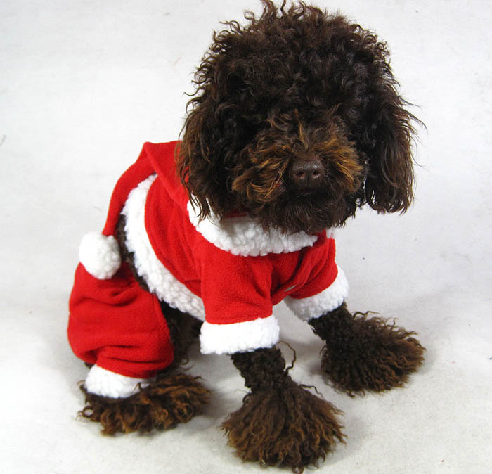 Santa Suit Dog photo - 2