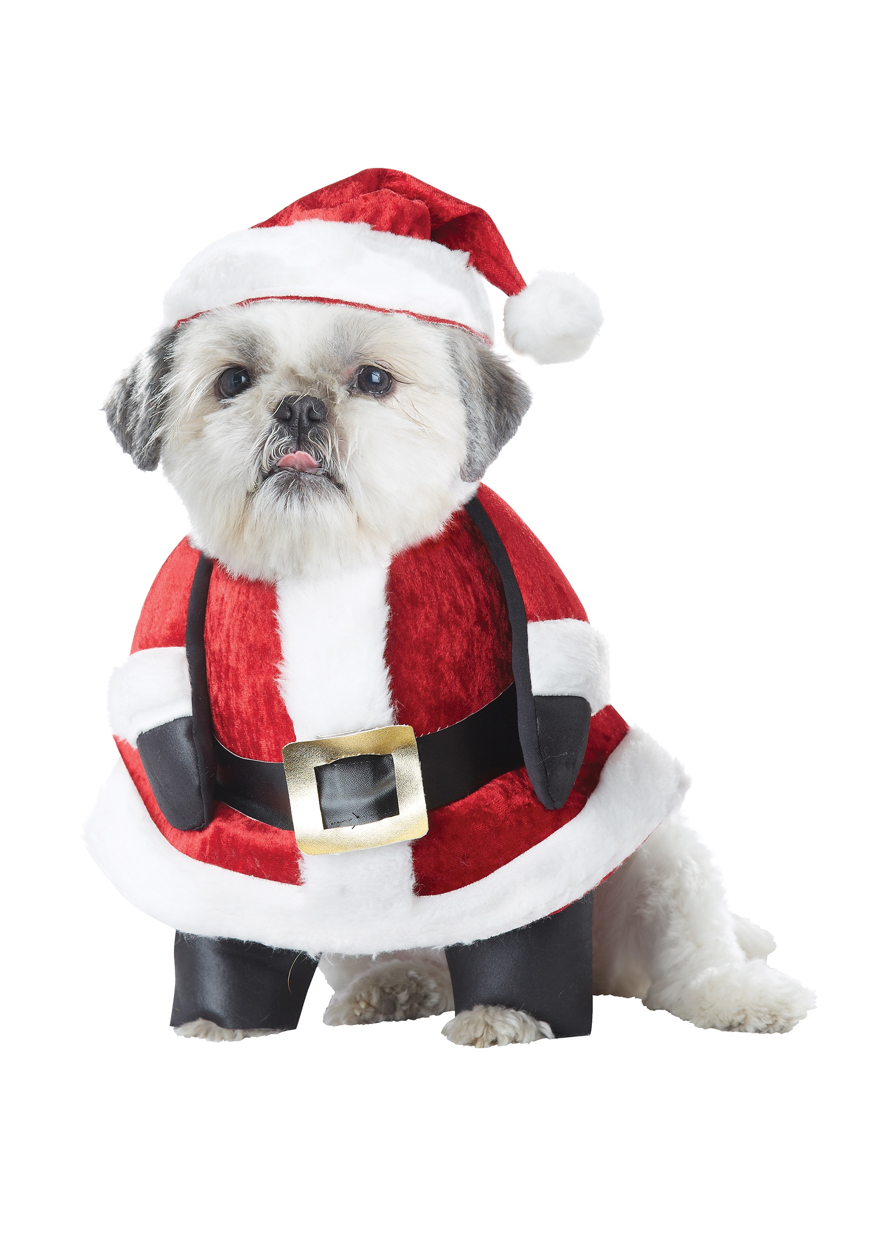 Santa Suit Dog photo - 3