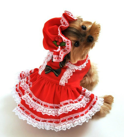 Small Dog Christmas Costumes photo - 2