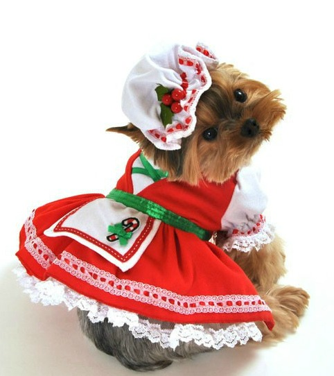 Small Dog Christmas Costumes photo - 3