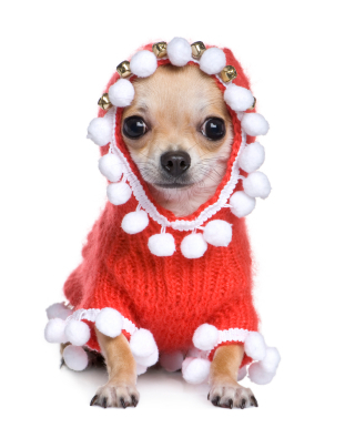 Small Dog Christmas Outfits photo - 3