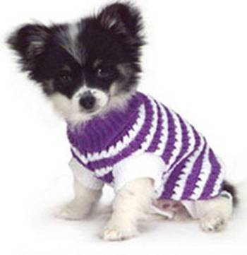 Small Dog Coats And Sweaters photo - 3