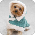 Small Dog Coats For Winter photo - 2