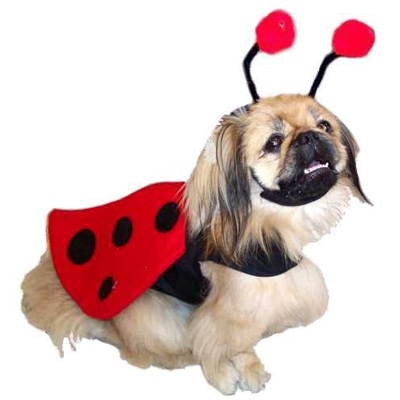 Small Dog Costumes photo - 2