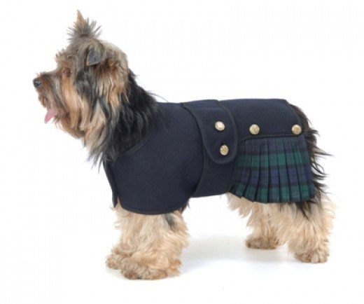 Small Dog Jackets photo - 3