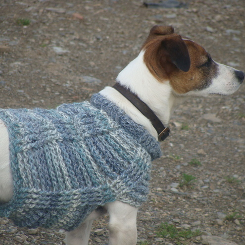 Small Dog Jumper photo - 1