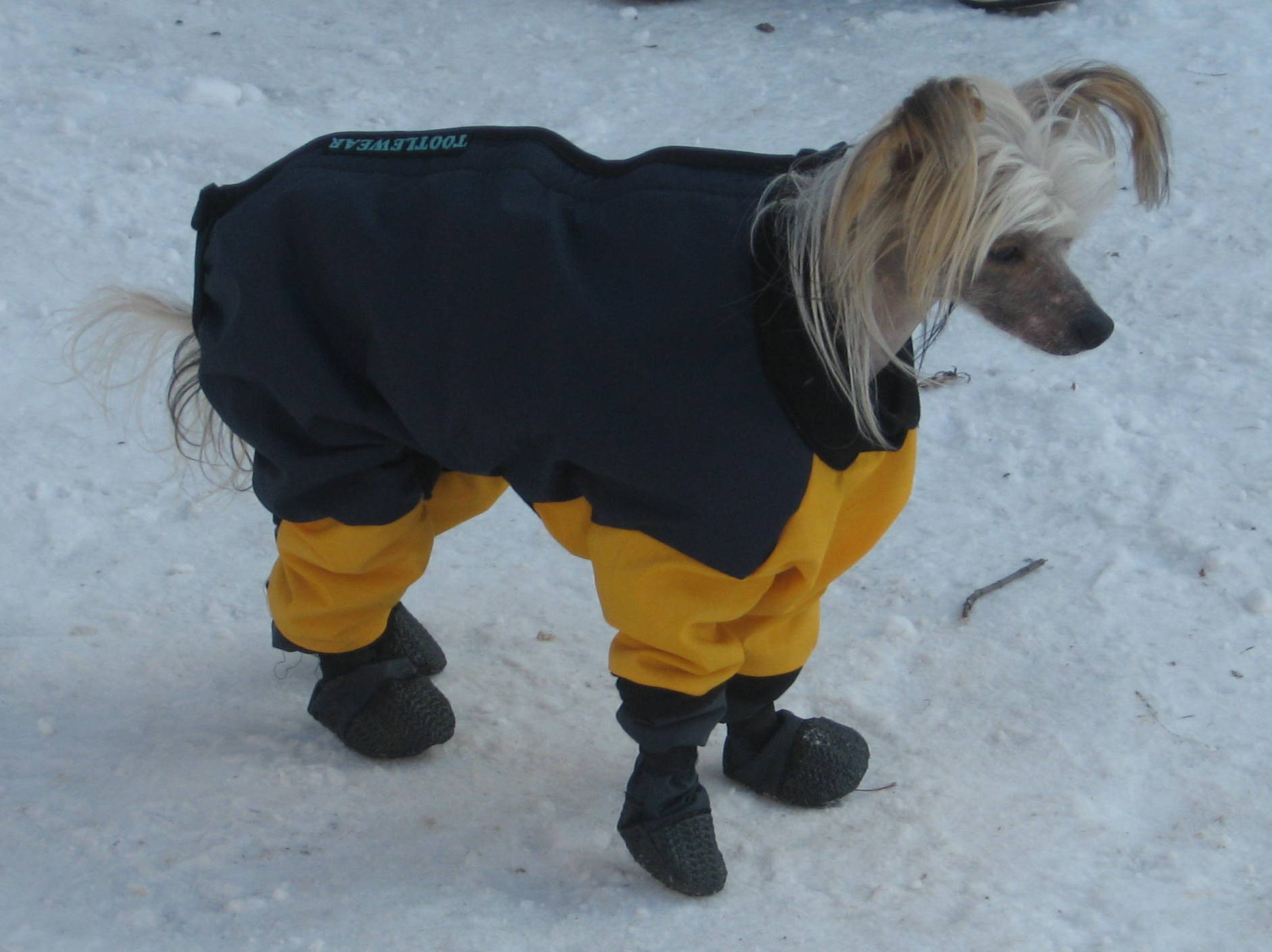 Small Dog Snowsuit photo - 1