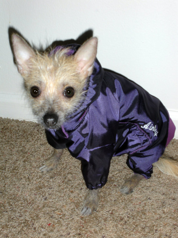 Small Dog Snowsuit photo - 2
