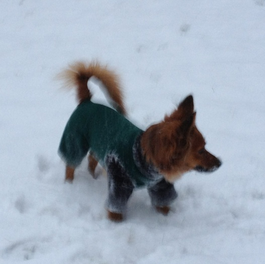 Small Dog Snowsuit photo - 3