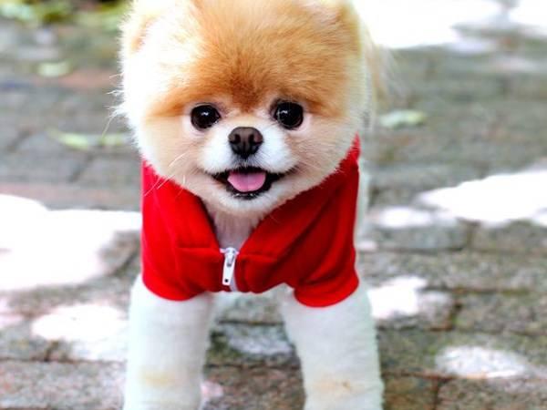 Small Puppy Coats photo - 3