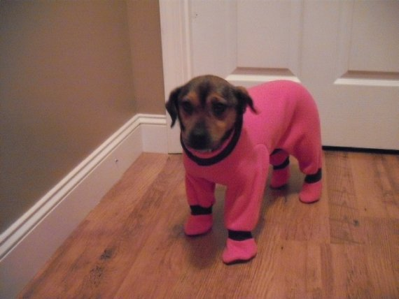 Snow Suits For Dogs photo - 3