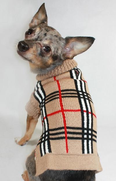 Stylish Dog Sweaters photo - 3