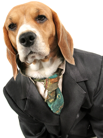 Suit For A Dog photo - 1