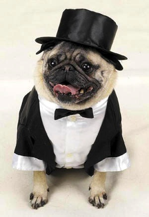 Suit For Dogs photo - 2