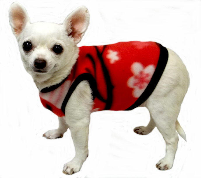 Sweater For Small Dogs photo - 3