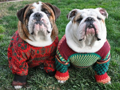 Sweaters For Bulldogs photo - 2