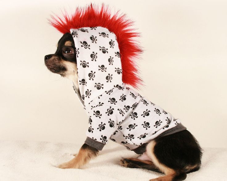 Teacup Chihuahua Puppy Clothes photo - 1