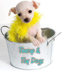 Teacup Clothing For Dogs photo - 3