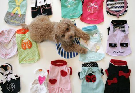 Teacup Poodle Clothes photo - 3