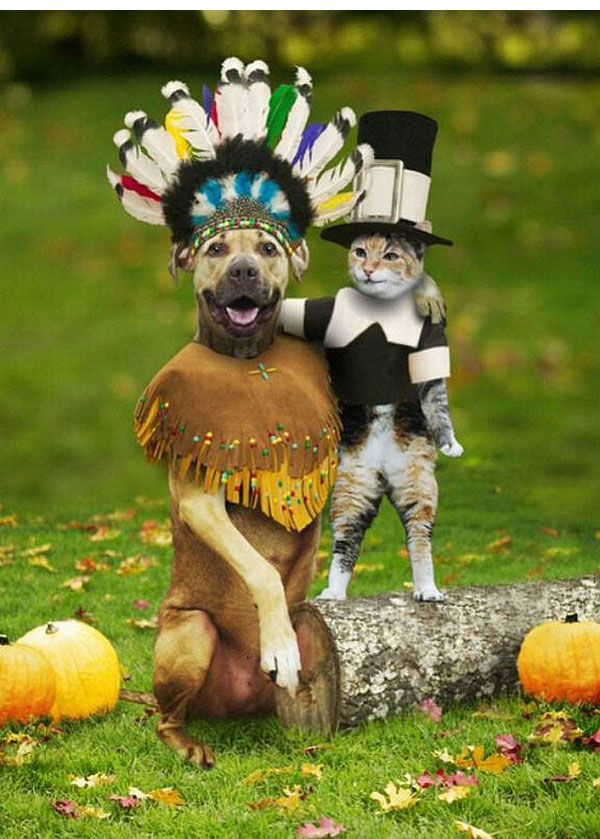 Thanksgiving Pet Costumes photo - 3