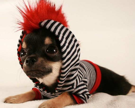 Tiny Chihuahua Clothes photo - 1