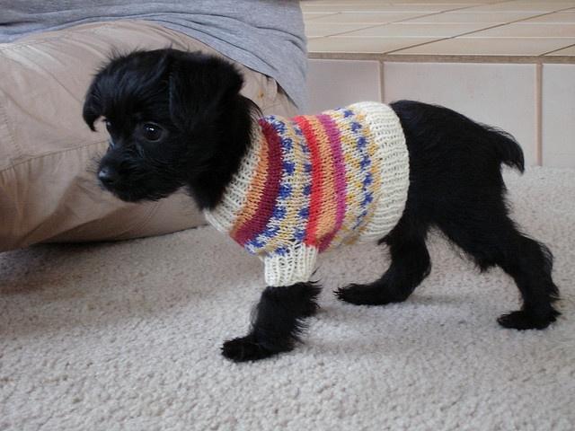 Tiny Dog Sweater photo - 3