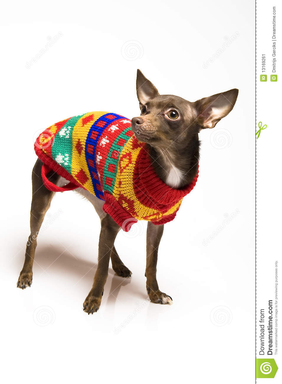 Toy Dog Clothes photo - 1