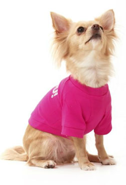 Toy Dog Clothes photo - 3