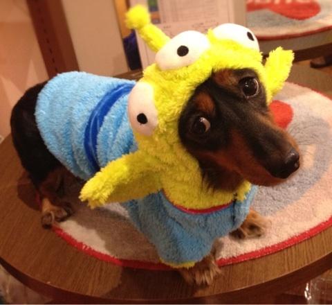 Toy Dog Costumes photo - 3