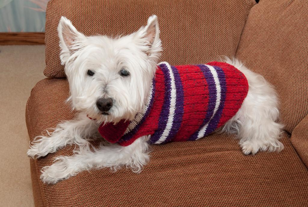 Toy Dog Sweaters photo - 2