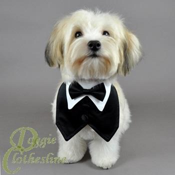 Tuxedo Dog photo - 1