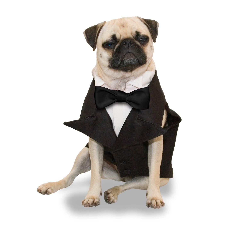Tuxedo Dog photo - 2