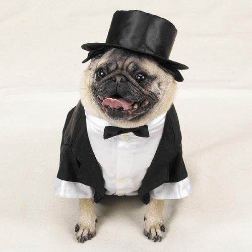 Tuxedo Dog Costume photo - 1