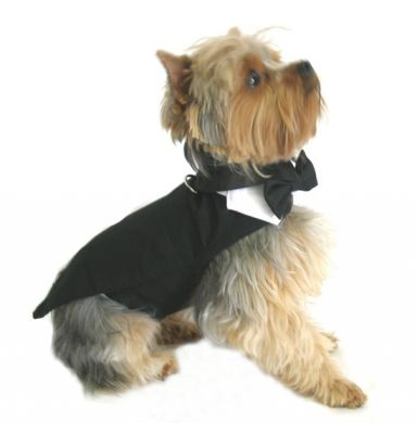 Tuxedo For Dog photo - 2