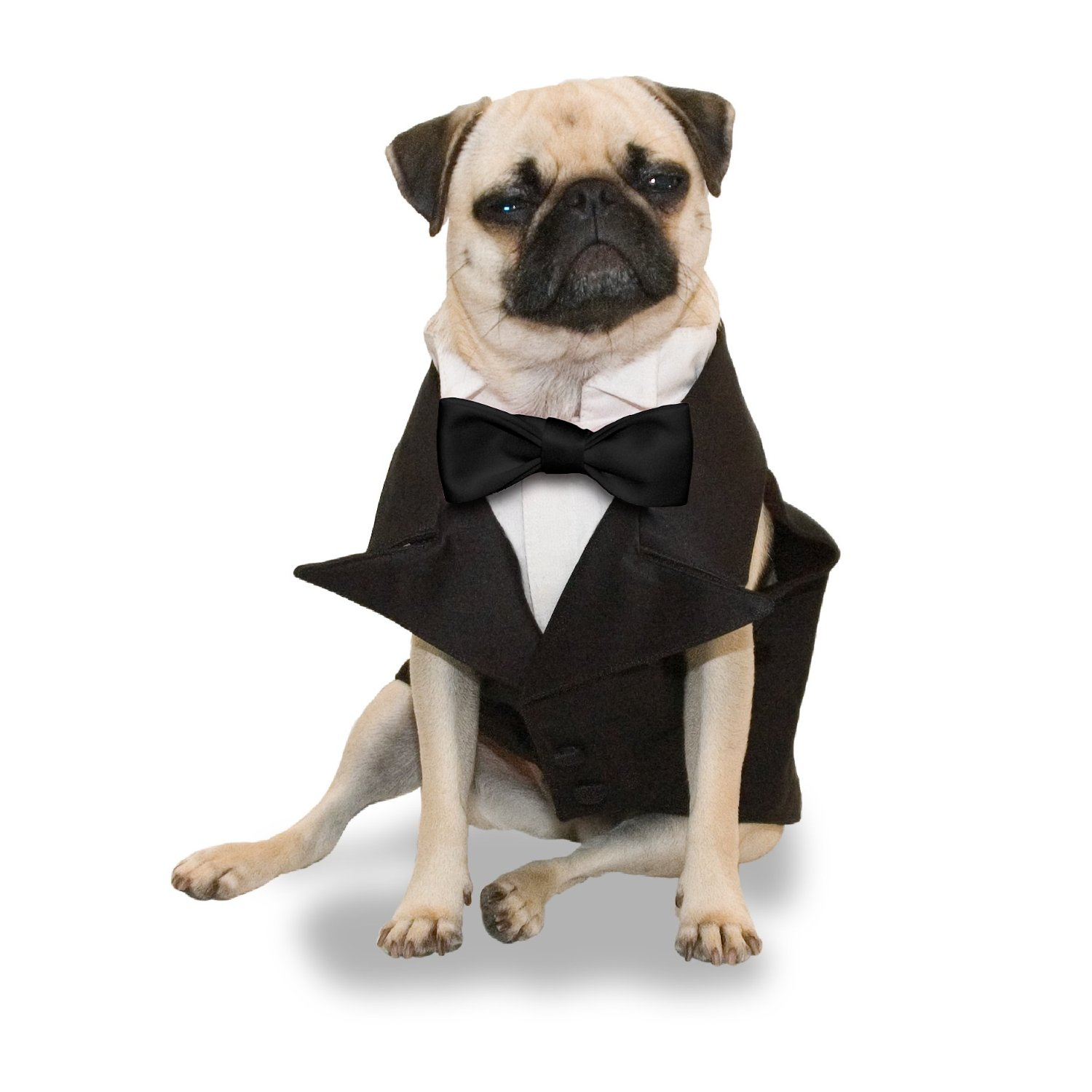 Tuxedo For Dogs photo - 2