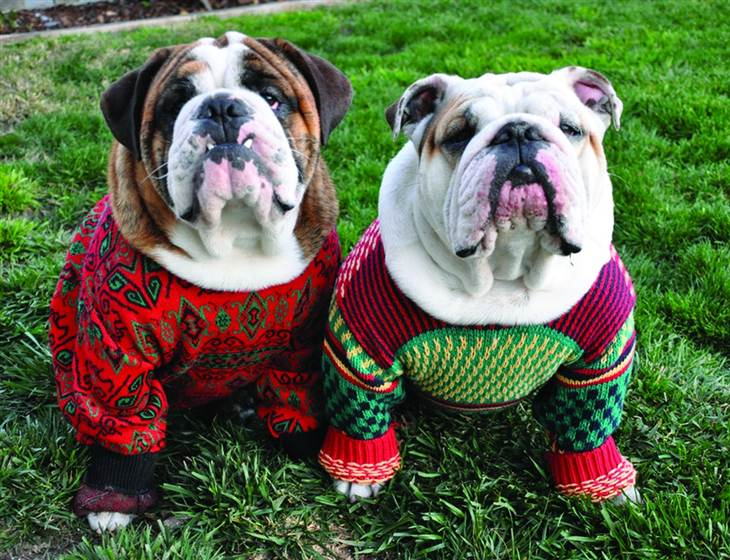 Ugly Christmas Sweater Dog photo - 1