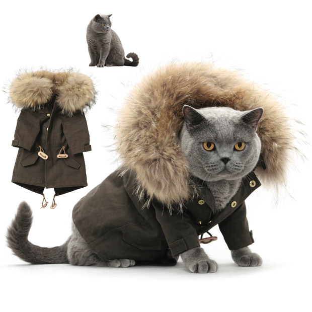 Winter Clothes For Cats photo - 1