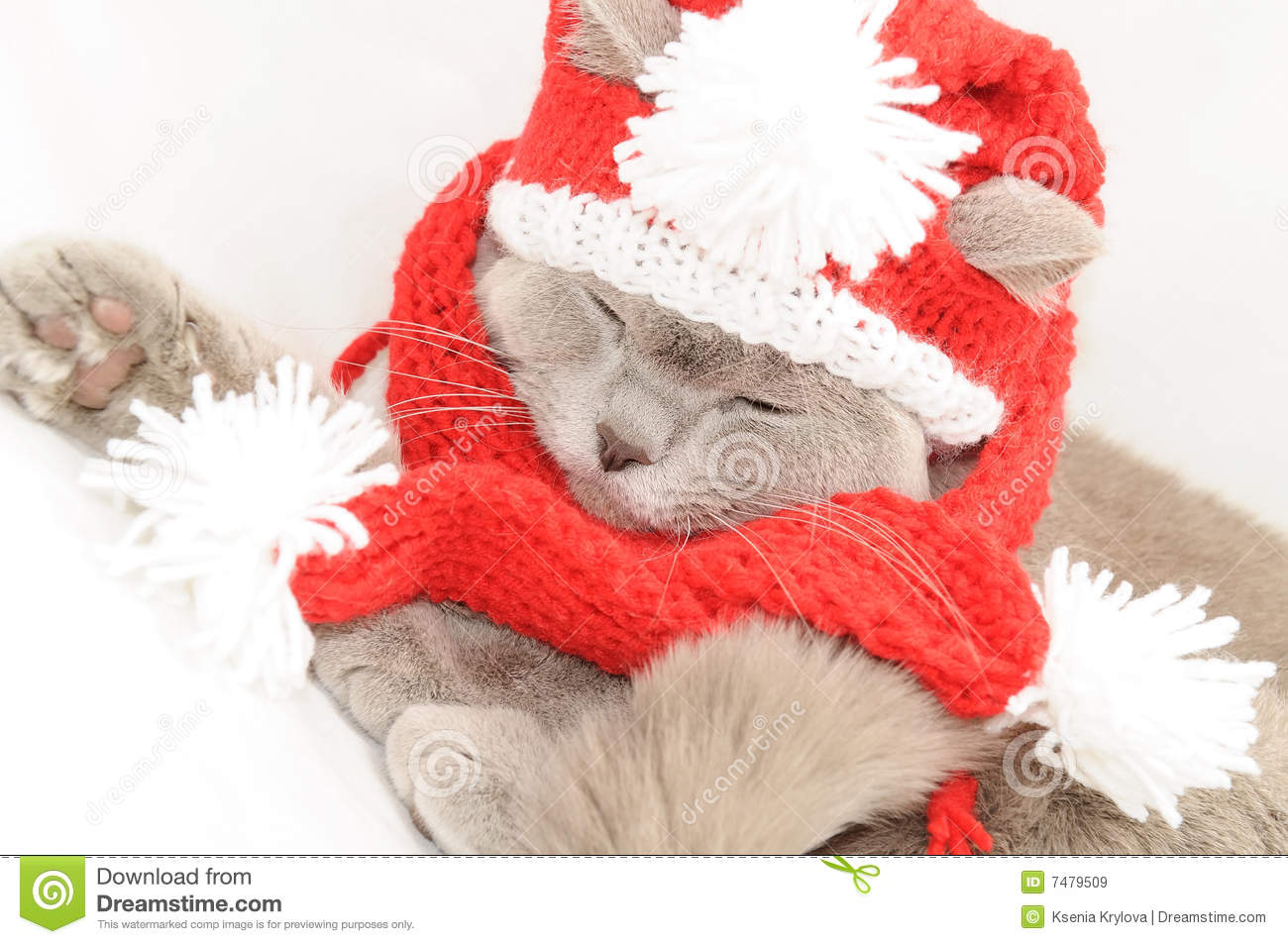 Winter Clothes For Cats photo - 2