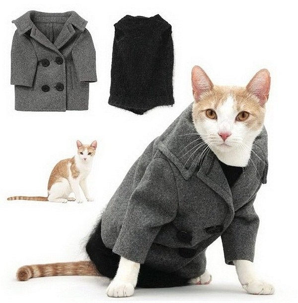 Winter Clothes For Cats photo - 3