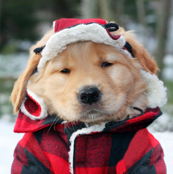 Winter Coats For Puppies photo - 2