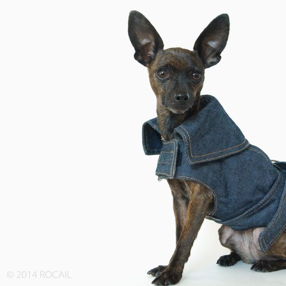 Winter Dog Coats For Small Dogs photo - 3