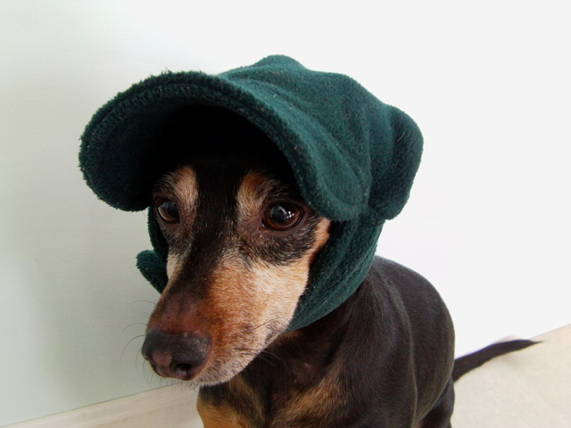 Winter Hats For Dogs Dress The Dog Clothes Your Pets. Crochet Black Stripe Dog  Hat Pet ... 99428754cd42