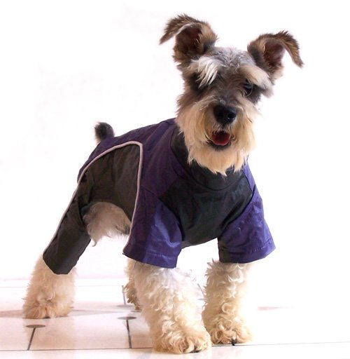 Winter Wear For Dogs photo - 2