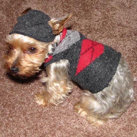 Yorkie Dog Sweaters photo - 2